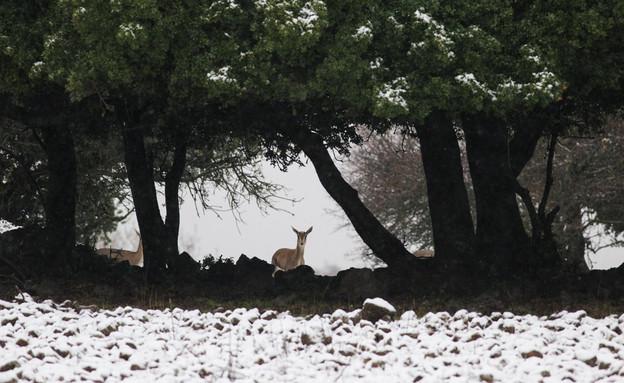 שלג בגולן (צילום: פלאש 90)