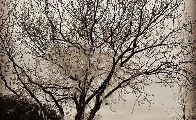 שלג במרום גולן