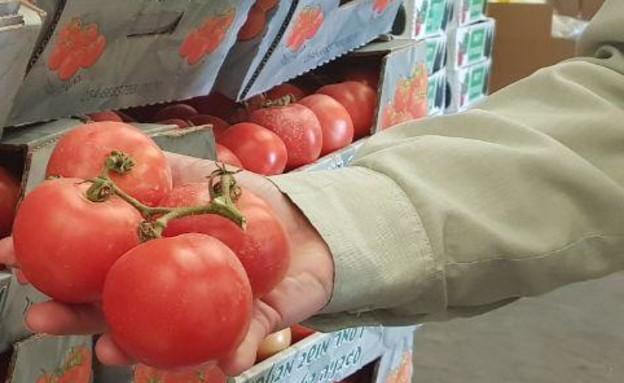 עגבניות, יסופקו, צהל, צבע, הגנה, עוטף, עזה, חקלאות