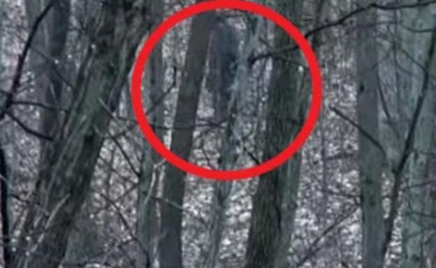 ביגפוט ביער