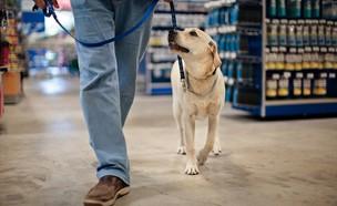 כלב (צילום: shutterstock | Erickson Stock)