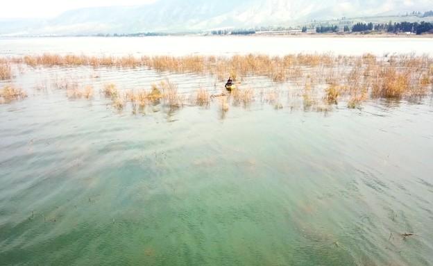 מטר מכנרת מלאה: כך נראה האי הנעלם מתחת למים