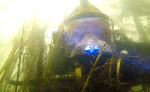 מטר מכנרת מלאה: כך נראה האי הנעלם מתחת למים (צילום: אסף גרינוולד)