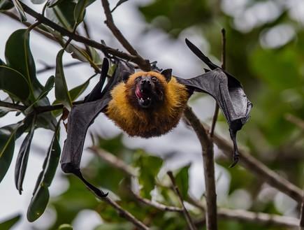 עטלף (צילום: thomas-lipke, ,nsplash)