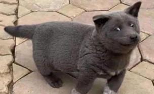 חתול או כלב? (צילום: רדיט\GallowBoob)