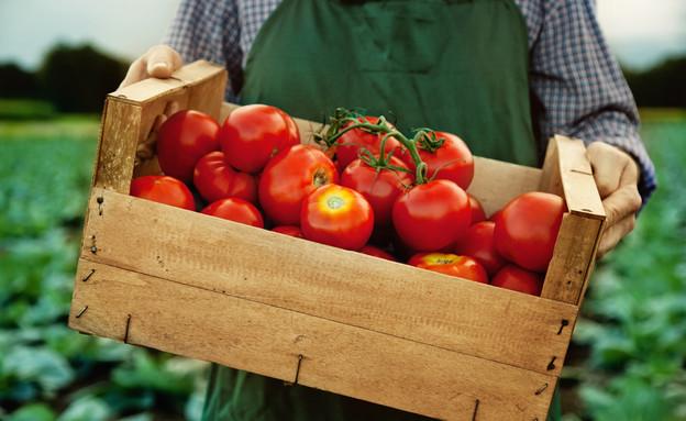 ארגז עגבניות (צילום: melhijad, shutterstock)