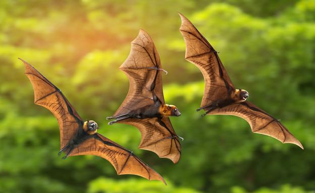 עטלפים (צילום: צילום מסך מתוך ווטסאפ)
