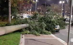 עץ נפל על מכונית (צילום: מועצה אזורית שוהם)