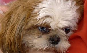 """תופעה איומה: מאז הקורונה, זינוק בנטישת כלבים (צילום: מתוך """"פאולה וליאון"""", קשת 12)"""