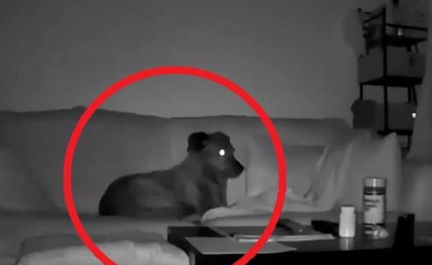 בר הכלב (צילום: Trevor Morgan, youtube)