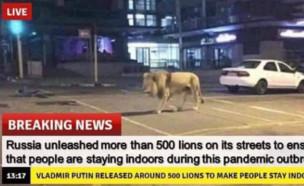 פייק ניוז אריות ברוסיה