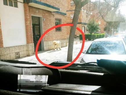 """""""יש פה כלב מאוד משונה שהולך ברחוב"""""""