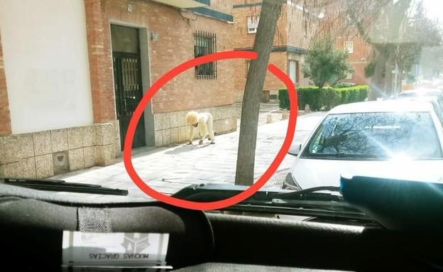 טולדו (צילום: Talaverano78, twitter)