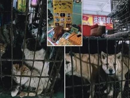 בסין חזרו לשגרה - בשווקים החלו למכור עטלפים