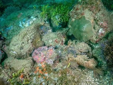 4 מהדגים המסוכנים בתבל בתמונה אחת - מצליחים לזהות?