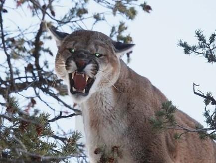 התפרצות הקורונה לחיינו - וחיות הבר אל ביתנו