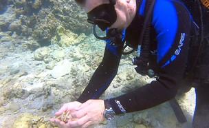 דני קושמרו בודק מה התחדש מתחת למים (צילום: N12)