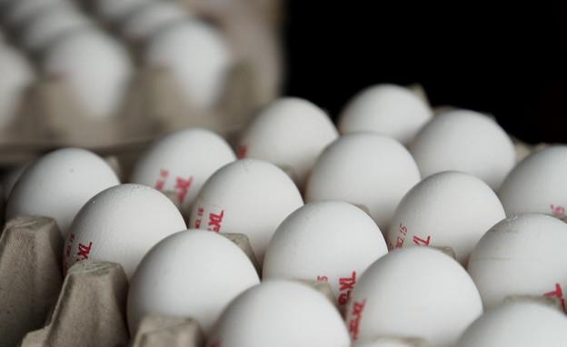 ביצים  (צילום: N12)