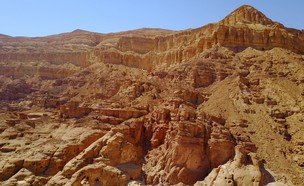 הערבה (צילום: עומר ארמוזה)