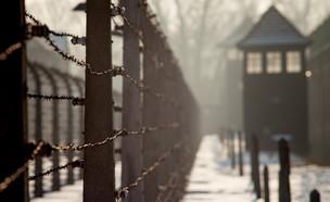יום השואה (צילום:  Szymon Kaczmarczyk | shutterstock)