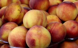 אפרסקים (צילום: עודד קרני)