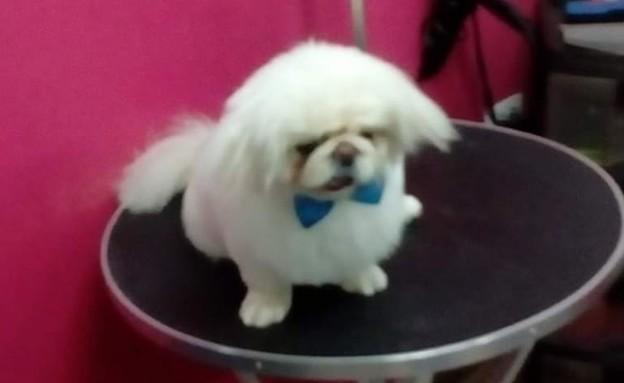 הכלב אייס (צילום: באדיבות נ')