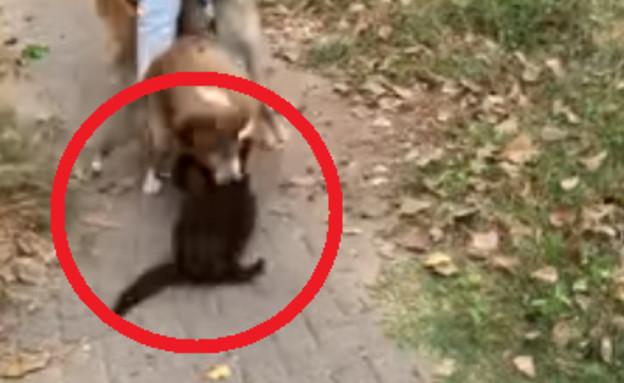 כלבים הרגו חתול ביפו (צילום: פייסבוק\בני שלזינגר)