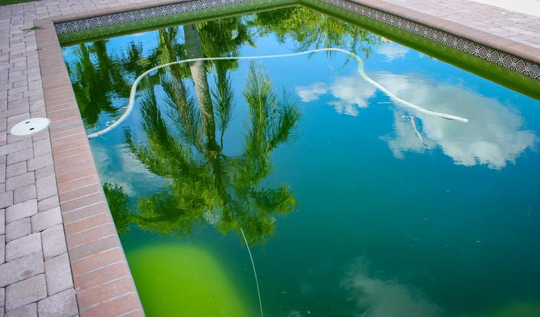 מים ירוקים בבריכה (צילום:  Art_rich, Shutterstock)