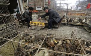 שוק חיות הבר בוואהן, סין (צילום: רויטרס)