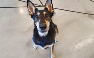 כלבים במשרד, צ'רלי (צילום: איתן מוריאנו)