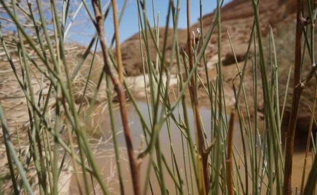 אום צלאח (צילום: עודד שיקלר)