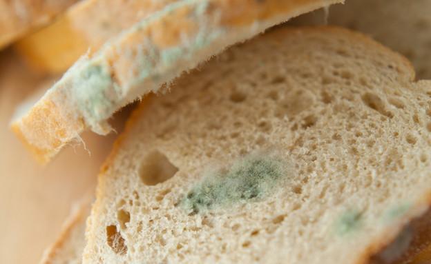 עובש בלחם (צילום:  JoannaTkaczuk, shutterstock)