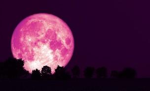 ירח תות (צילום: shutterstock)