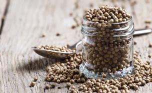 זרעי כוסברה (צילום: 5PH, shutterstock)