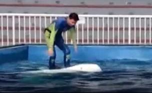 רוכב על לוויתן (וידאו WMV: צילום מסך)
