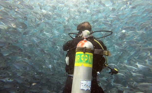 דני קושמרו צולל בים התיכון (צילום: החדשות 12)