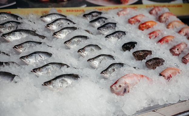 דגים טריים בקרח (צילום: shutterstock)