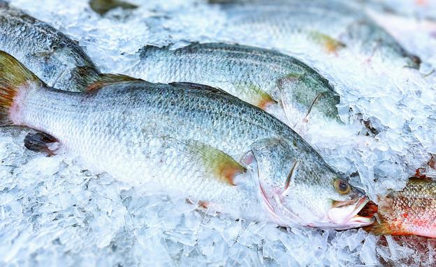 דגים קפואים (צילום: shutterstock)