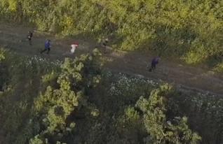 גניבת אבוקדו ממטע (צילום: משטרת ישראל)