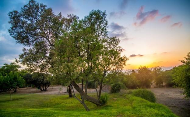 גן לאומי אשקלון (צילום: מנו גרינשפן)