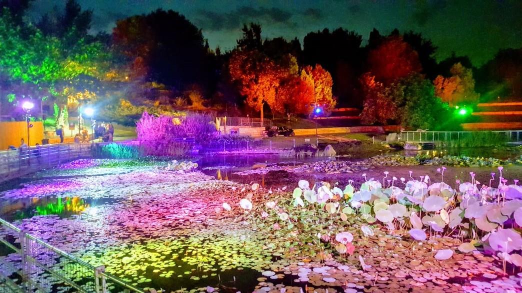 גן בוטני (צילום: תום עמית)