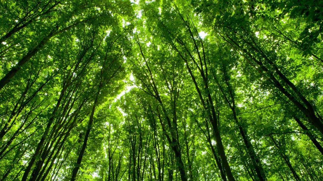 יער (צילום:  vovan, shutterstock)