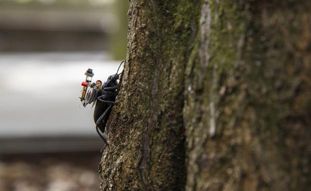 מצלמה על גב חרק (צילום: Mark Stone/University of Washington)