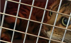 חתולה תקועה בשדה תעופה (צילום: פייסבוק/נח - ההתאחדות הישראלית של הארגונים להגנת בעלי החיים)