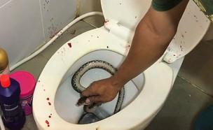 ננשך בשירותים (צילום: טוויטר, twitter)