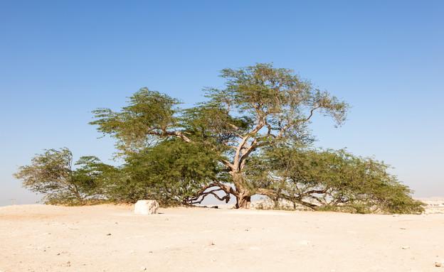עץ החיים (צילום:  Philip Lange, shutterstock)