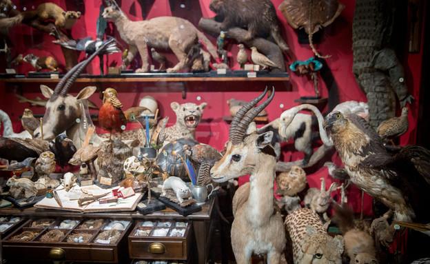 מוזיאון הטבע (צילום: Miriam AlsterFLASH90)