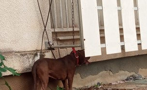 התעללות בכלב (צילום: פרטי)