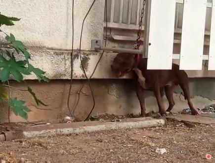 אשדוד: הוגש כתב אישום נגד בעלי הכלבה שנקשרה מחוץ לבית וגססה למוות