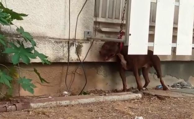 התעללות קשה בכלב (צילום: פרטי)
